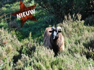 De nieuwste route Exloo-Odoorn Drenthe